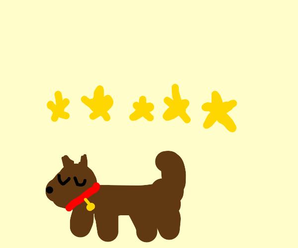 5 Star Pet