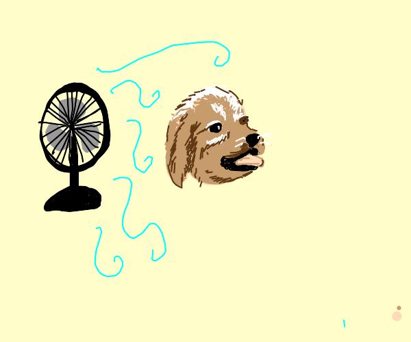 Floating puppy head enjoys a fan breeze
