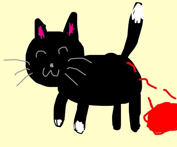 Happy cat is bleeding pee