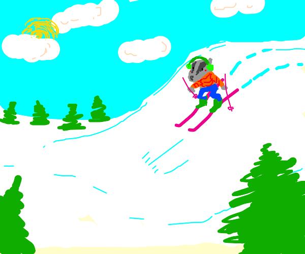 A badger skiing