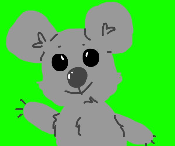 koala in front of a green screen
