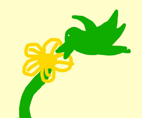 Green bird tasting the flower