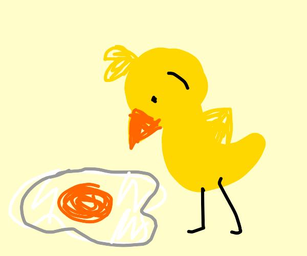 small chicken looks at yolk inside big egg