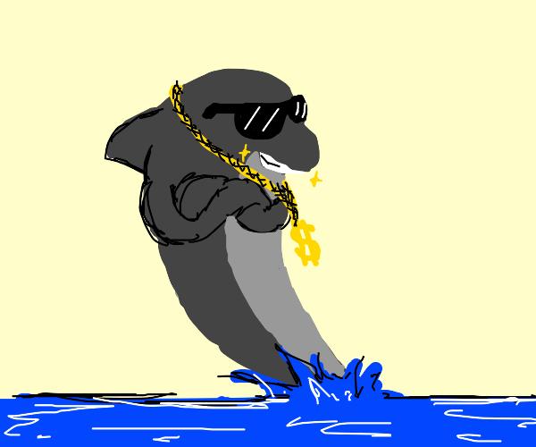 Dapper Dolphin