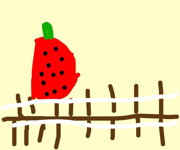 Strawberry tied to train tracks