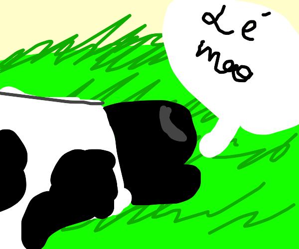 Cow moos