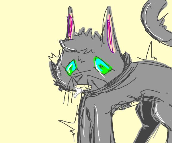 A cat having a animal seizure