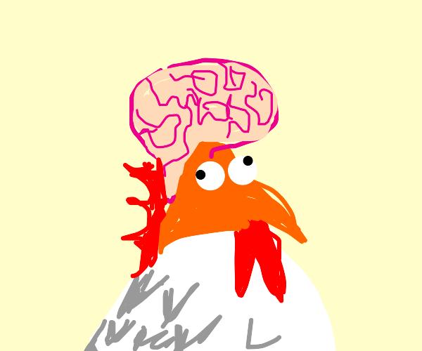 Brainy Chicken