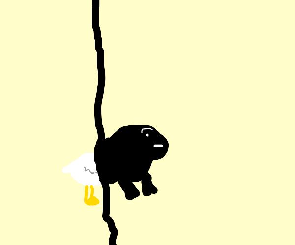 Half chicken half gorilla