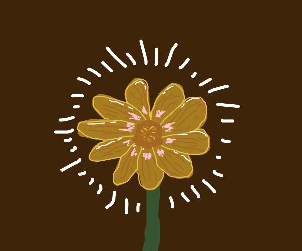 Shimmering flower