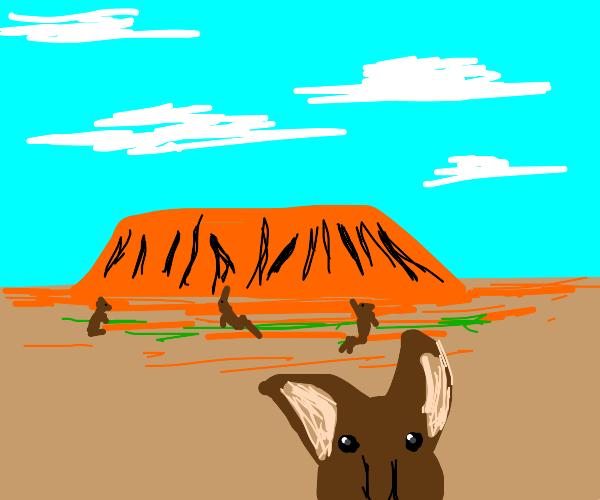 Kangaroos jumping around Ayers Rock (Uluru)