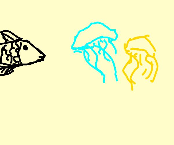 Fish stares at jellyfish