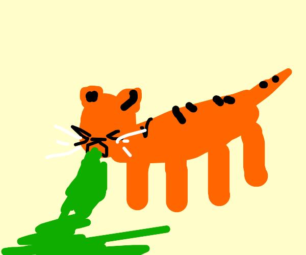 Tiger Barfing
