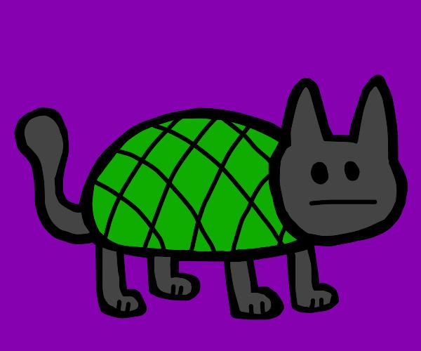 Cat is turtle?
