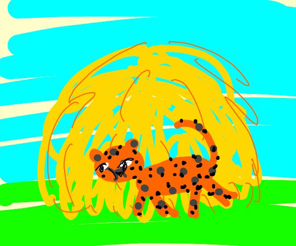 Cheetah in a haystack