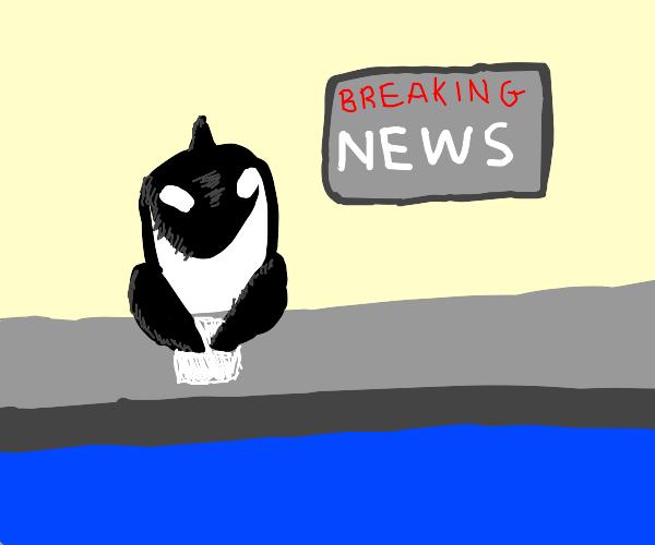 Orca News Anchor