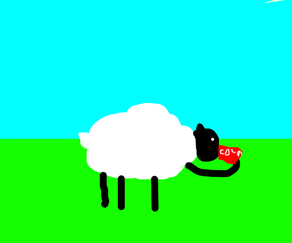 Sheep drinking can of soda