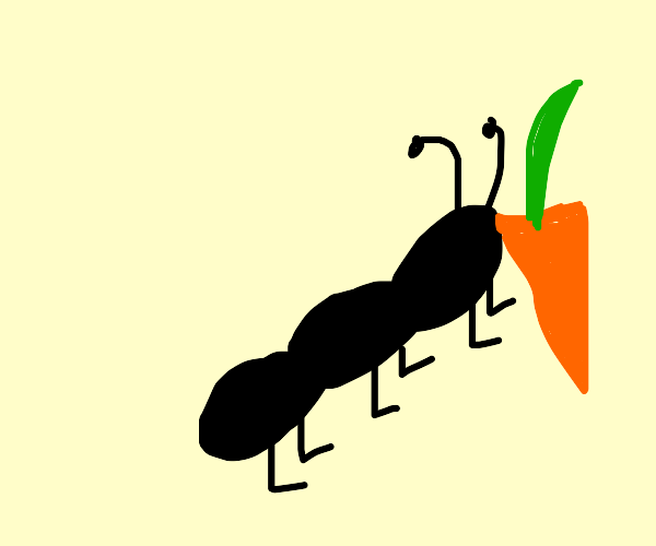 Ant boxing Vegetable