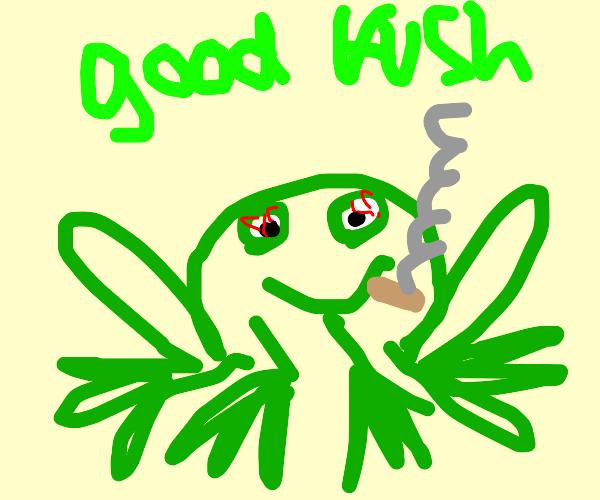 frog smoking ouid