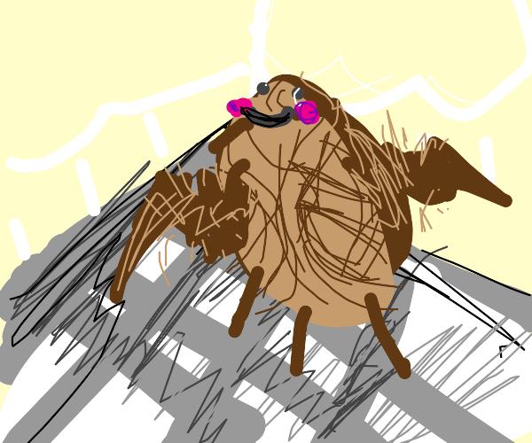 Cockroach dancing