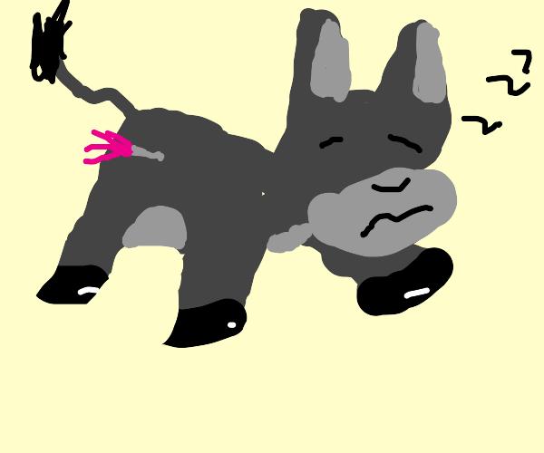Tranquilized Donkey