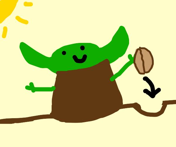 Yoda planting Walnuts