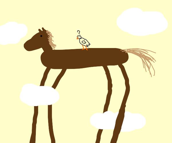 Long legged horse