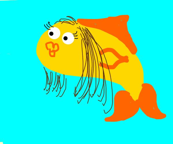 hairy goldfish (female)