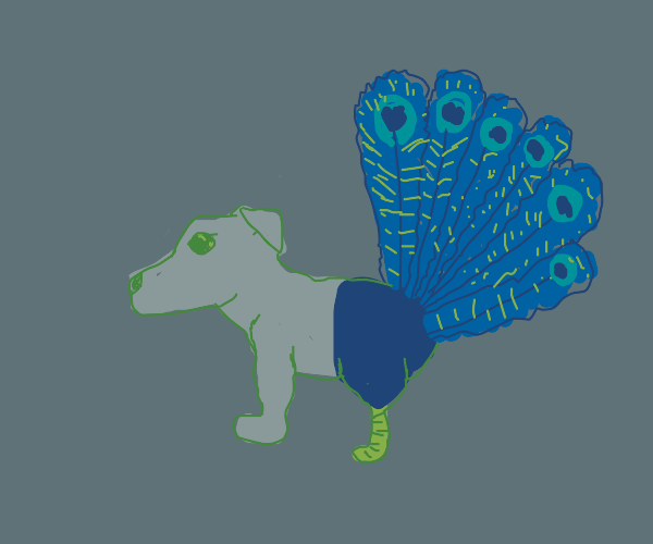 Peacock mixed with a dog