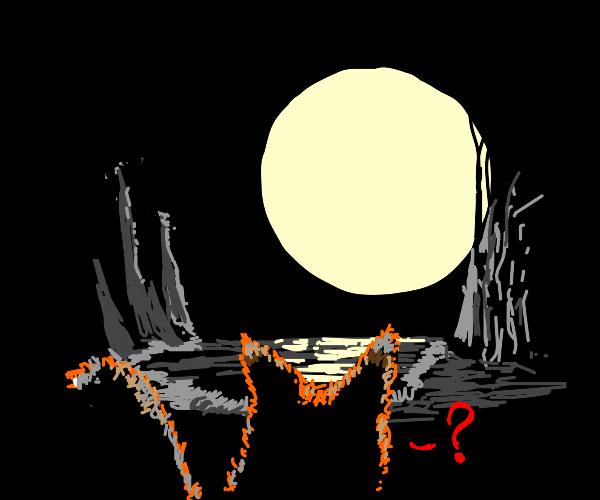 Fox wondering bout full moon