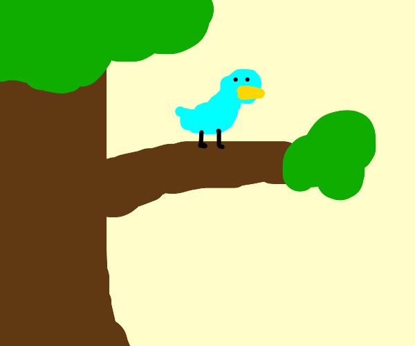 a cyan bird sitting on a branch