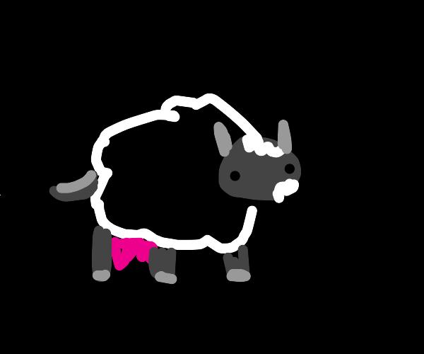 sheep-cow