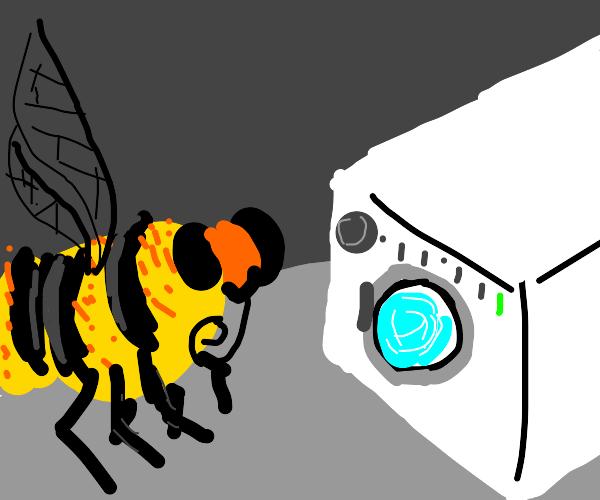 Bee doing laundry