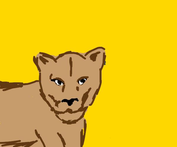 Important Puma