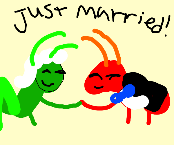 a cricket and ant get married
