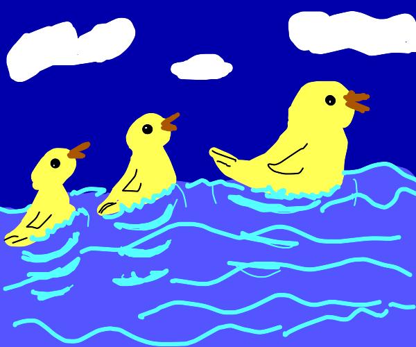 Ducks swimming on water