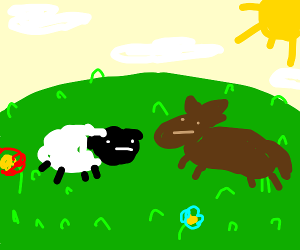 sheep and horse on a field