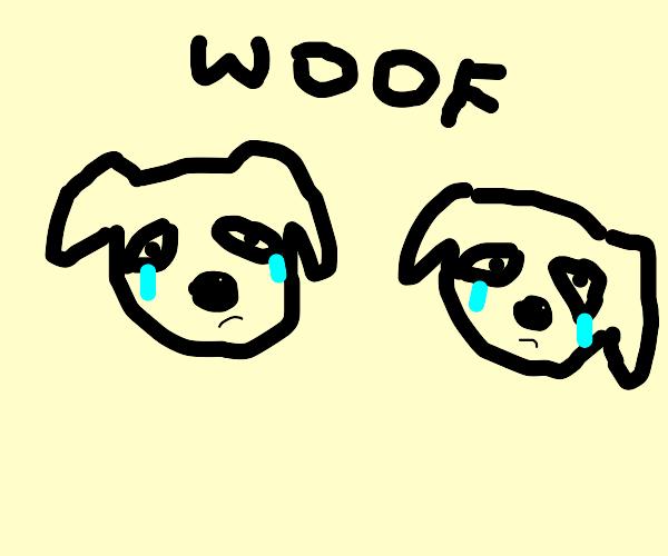 Two sad dogs