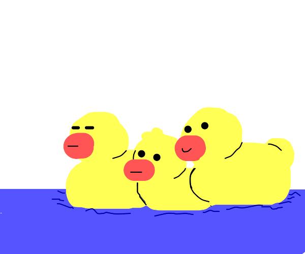 3 ducks a swimming