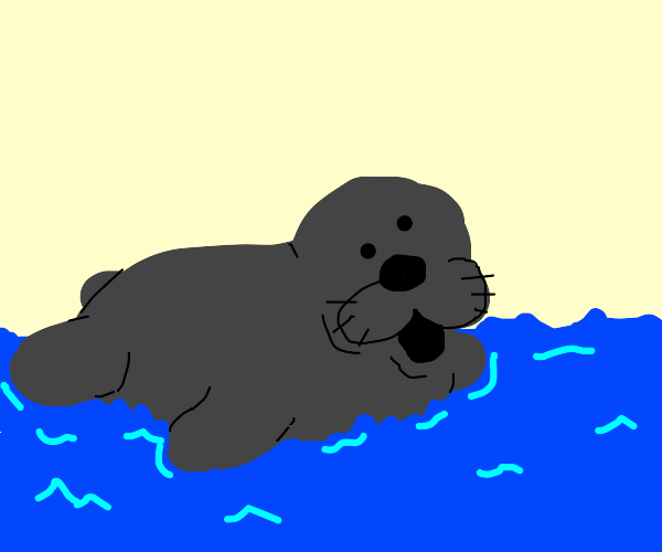 A seal swimming.