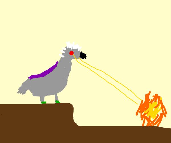 Grey Pigeon with White Hair Shooting Eyelazer