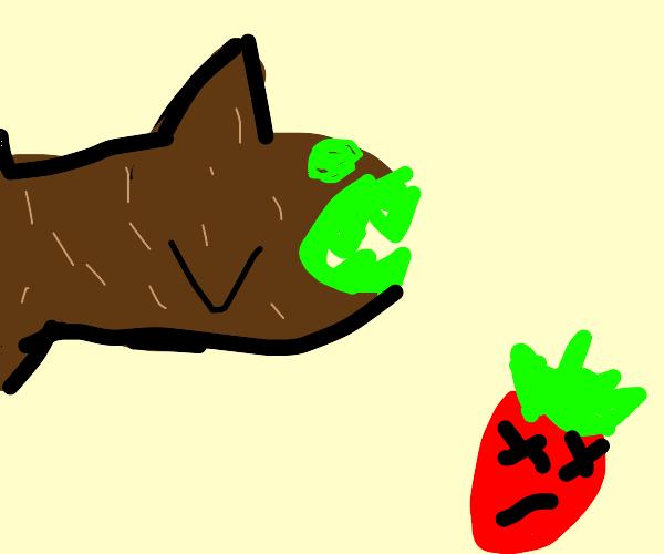 Dead Strawberry Kiwi Shark