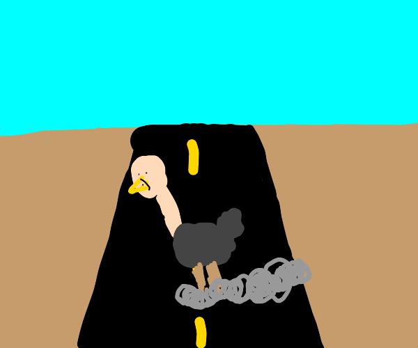 Ostrich Roadrunner