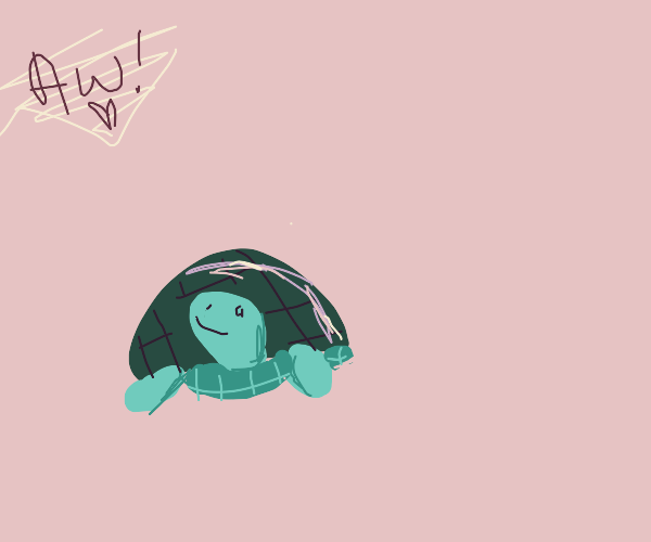 a turtle with someone off screen going aww