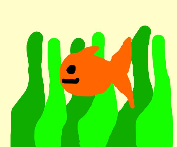 Fish by seaweed