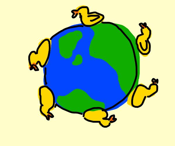 Ducks around the world