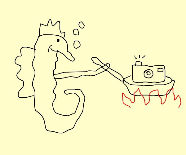 Seahorse cooking a Camera