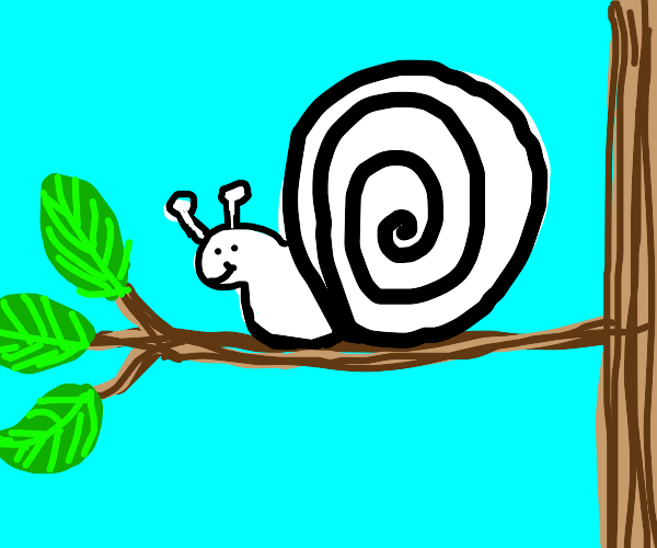 A black-and-white snail on a branch