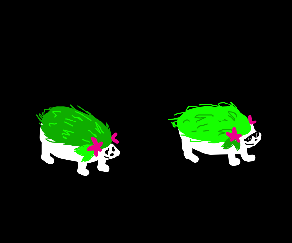 Shaymin'a different forms