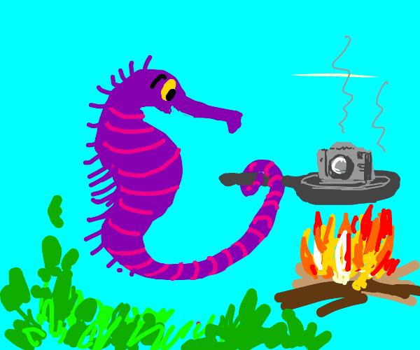 seahorse frying a camera